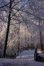 besneeuwde bomen tuin paleis soestdijk