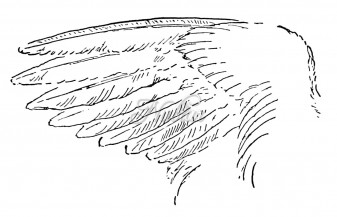 vleugel sieraad ring  symbool ring