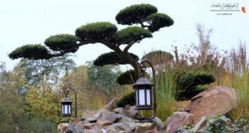 bonsai boom efteling